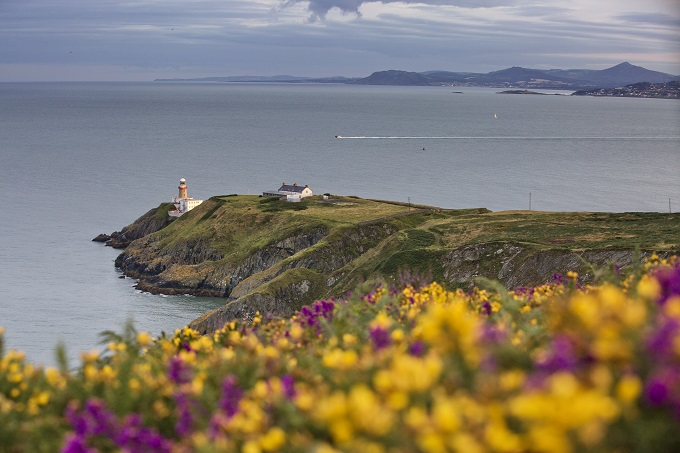 The Howth Cliff Walk with colourful blossoms in the foreground